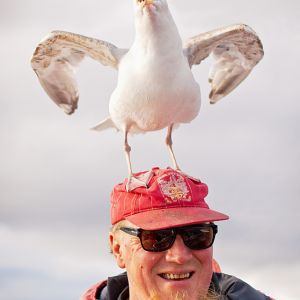 ole martin with seagull
